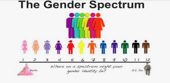 Image of 'The Gender Spectrum' promoted by gender ideologists, showing a scale of figures with Barbie at one end and GI Joe at the other